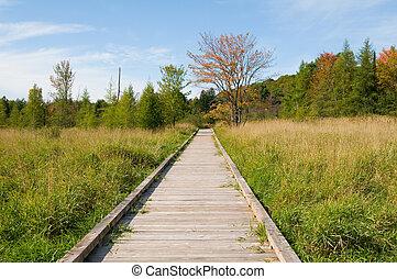boardwalk through a marsh in fall