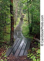 Boardwalk through the woods.