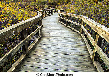 Boardwalk Winds Through A Wetlands