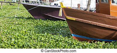water hyacinth - Boat among the water hyacinth