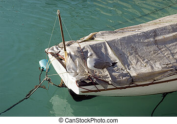 Part of old wooden boat and sea gull