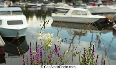 Boat Marina in summer
