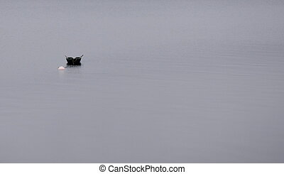Boat on the mystic foggy lake