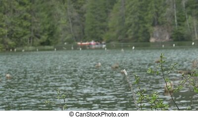 Boating on the Lake - View of a greenish lake with slowly...