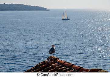 boats on the sea and seagull on the roof