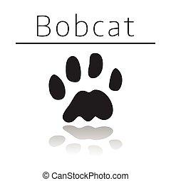Bobcat animal track