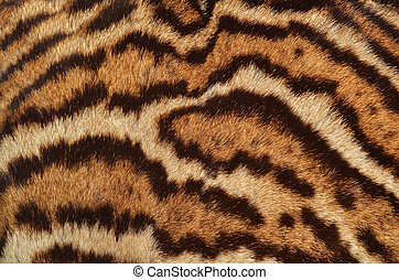 bobcat fur closeup - closeup of bobcat fur texture...