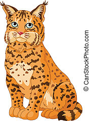 Bobcat - Illustration of wild bobcat