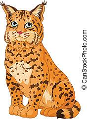 Bobcat - Illustration of wild bobcat