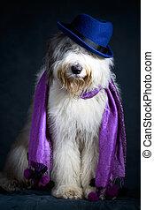 Bobtail dog