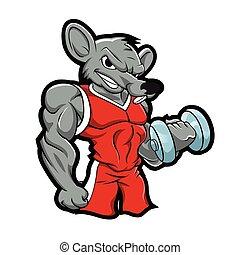 bobybuilding, turnhalle, training, ratte