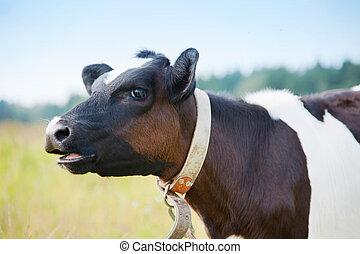boca abre, vaca