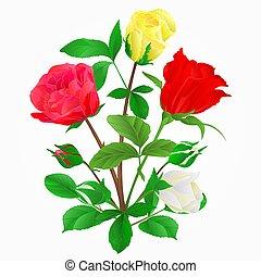 boccioli rosa, mazzolino, giallo, vector.eps, rose, bianco rosso