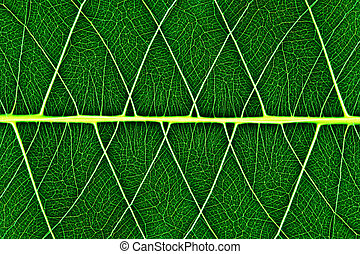 bodhi leaf macro pattern of green
