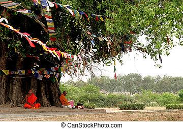Bodhi tree in Lumbini, Nepal and monks