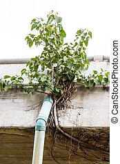 Bodhi tree on the bridge