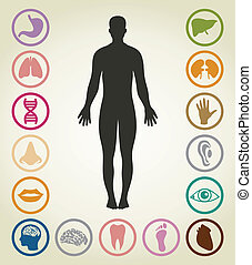 Set of bodies of the person. A vector illustration
