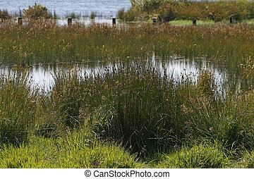 Bodmin Moor, Colliford Lake