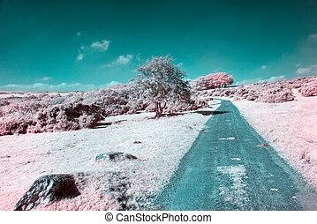 Bodmin Moor in Infrared