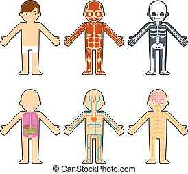 Body anatomy for kids. The skeleton and muscles, nervous ...
