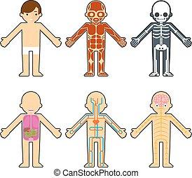 Body anatomy for kids