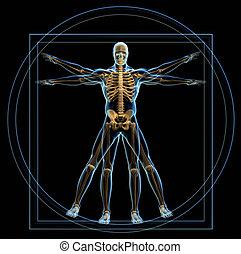 Vitruvian man - Body and skeleton in Vitruvian man - 3d ...