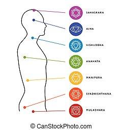 body., energia, sistema, umano, chakra, centri
