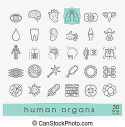 body., ikonen, olika, presenterande, mänsklig, organs