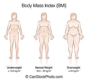 Body Mass Index BMI Female Body Thin Fat Normal