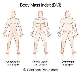 Body Mass Index BMI Male Body Thin Fat Normal