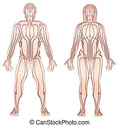Body acupuncture meridians of man and woman - alternative therapy tcm treatment infographic - isolated vector illustration on white background.