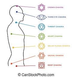 body., mitten, menschliche , system, energie, chakra