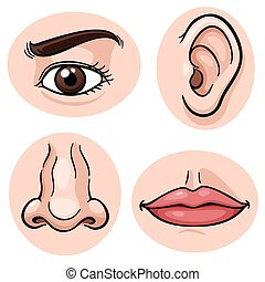 Body part - Vector illustration of depicting the 4 senses
