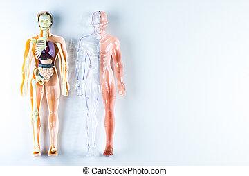 body part - vision of human organs
