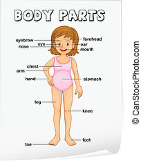 Body parts - Illustration of parts of the body sheet