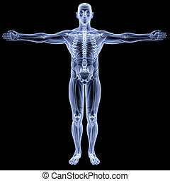 body - male body under X-rays. isolated on black