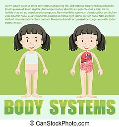 Body system diagram of a girl