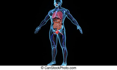 Body with organs - Two or more organs working together in...