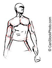 bodybuilder illustration - bodybuilder vector illustration
