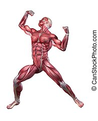 bodybuilder, pose