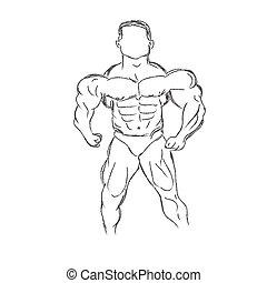 bodybuilding, bodybuilder, vector