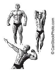 bodybuilding, trio