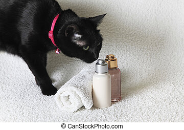 Black cat and the isolated of the shampoo bottle set in spa on white background
