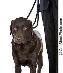 boeiend, wandeling, dog
