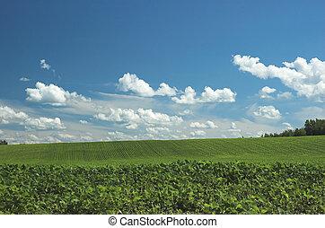 boer veld, groene