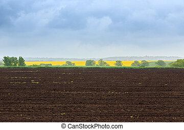 boer veld, in, lente