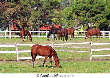 boerderij, coraal, met, paarden
