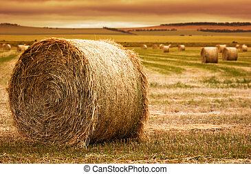 boerderij, de baal van het hooi
