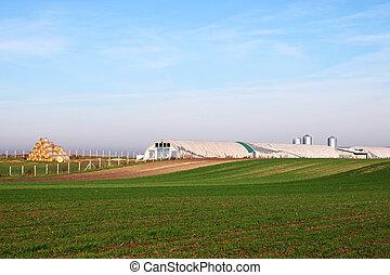boerderij, en, groene tarwe, akker, landelijk landschap