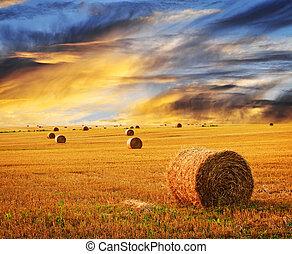 boerderij, gouden, op, zonsondergang veld